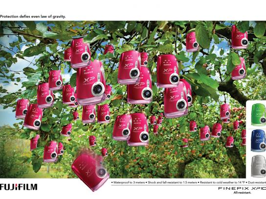 Fuji Print Ad -  Apples