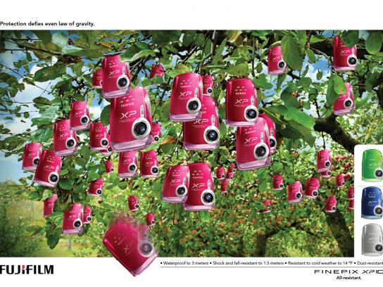 Fuji Print Ad -  Apples