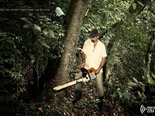 Disque-Denúncia Print Ad -  Forest