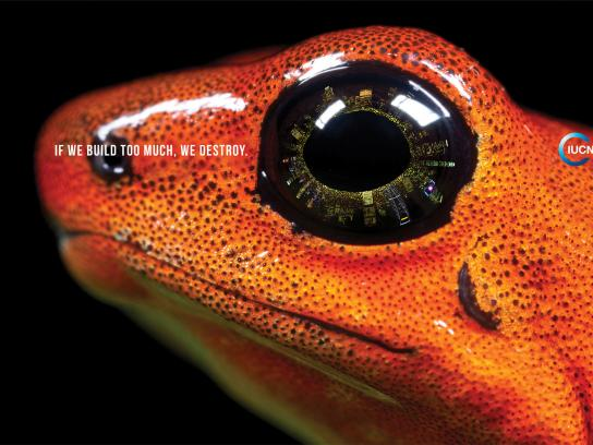IUCN Print Ad -  Frog