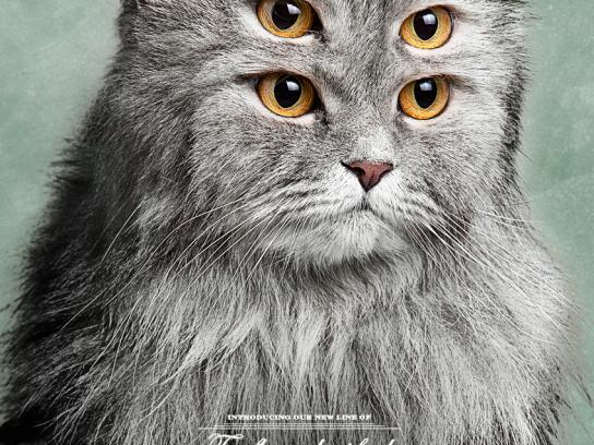 Pet Show Print Ad -  Cat, 1
