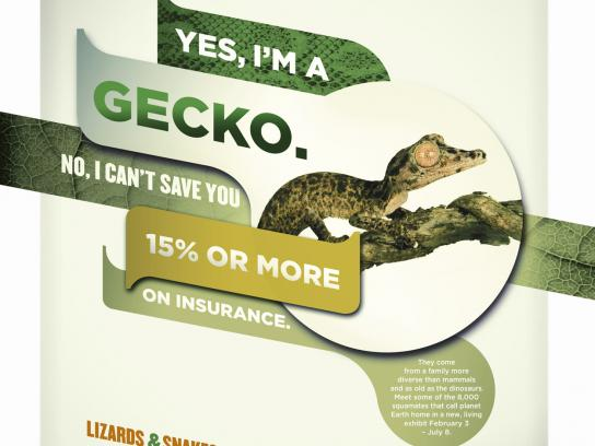 Denver Museum of Nature & Science Print Ad -  Gecko