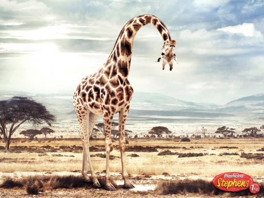 Stephens Print Ad -  Giraffe