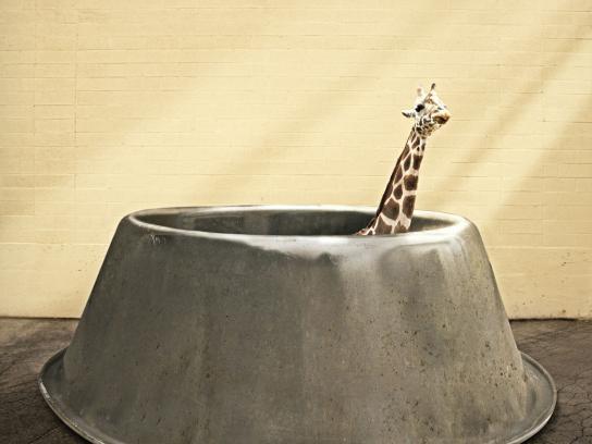 Hogle Zoo Print Ad -  Giraffe