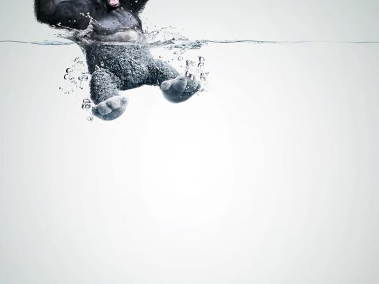 Lenor Print Ad -  Gorilla
