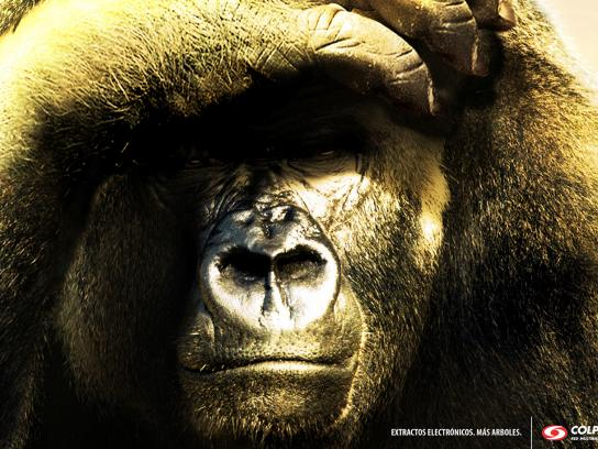 Colpatria Print Ad -  Gorilla