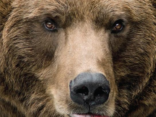H2O Pro Lures Print Ad -  Bear