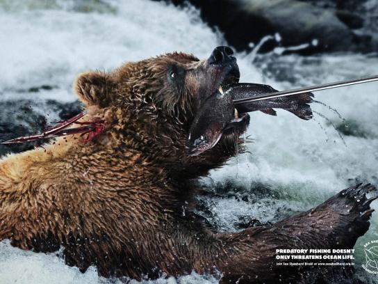 Sea Shepherd Print Ad -  Harpoon, Bear