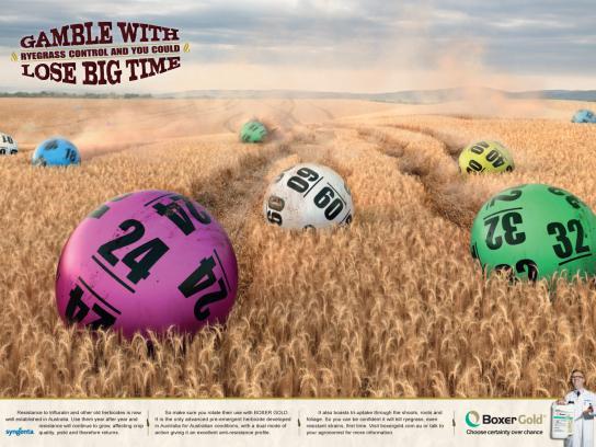 Boxer Gold Print Ad -  Gamble and you'll lose, Bingo
