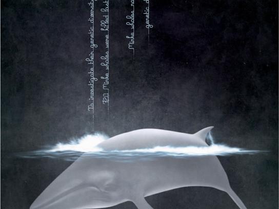 IFAW Print Ad -  Minke