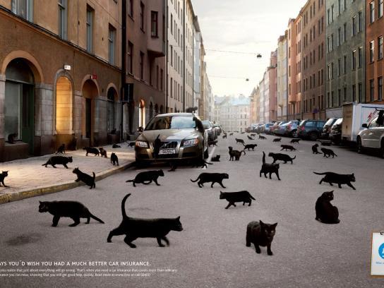 If Print Ad -  Black cats