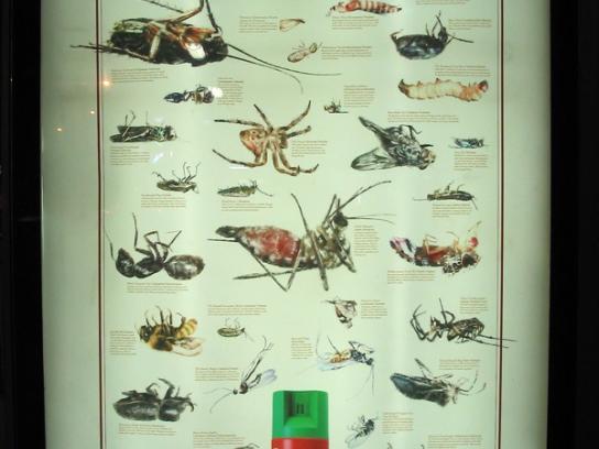 Baygon Print Ad -  Death