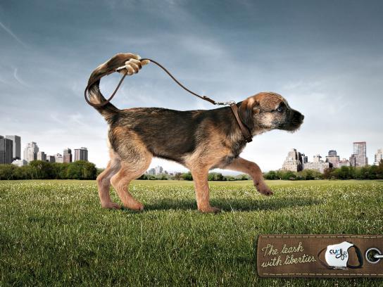 Curli Print Ad -  Dog, 3
