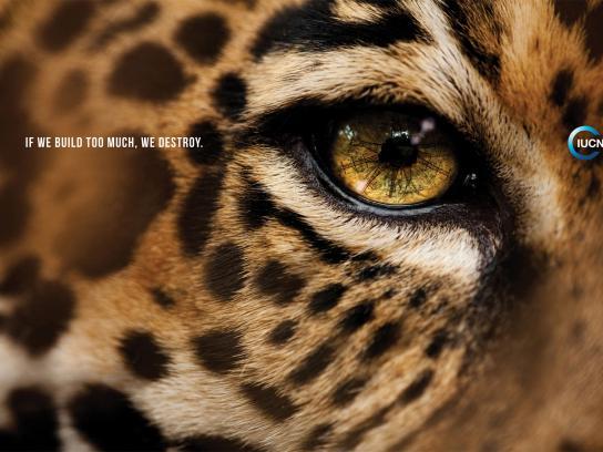 IUCN Print Ad -  Jaguar