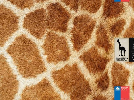 Zoologico Nacional Print Ad -  Giraffe