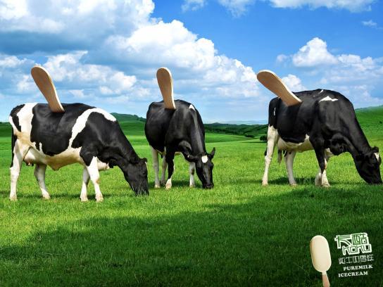 Kaku Print Ad -  Cow