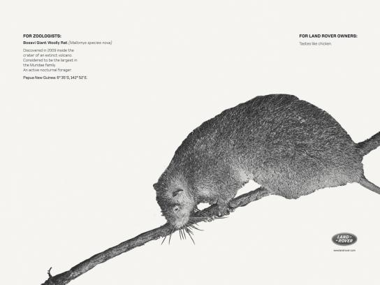Land Rover Print Ad -  Bosavi Giant Wolly Rat