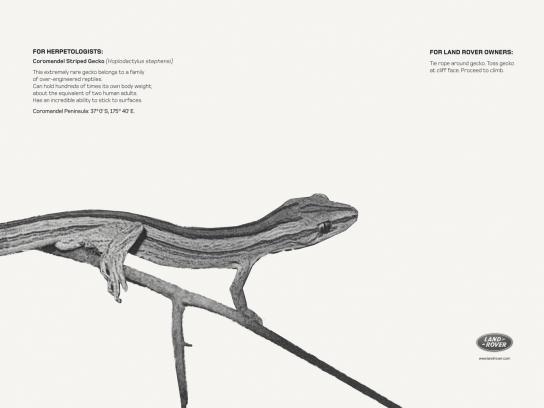 Land Rover Print Ad -  Coromandel Striped Gecko