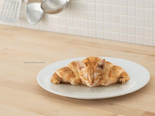 Lifebuoy Print Ad -  Kitten