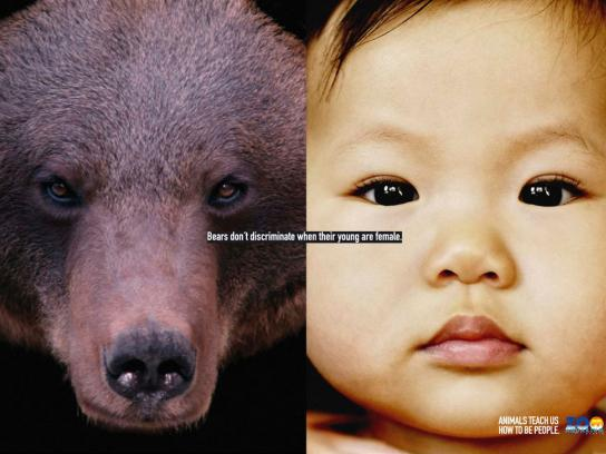 Madrid Zoo Print Ad -  Bear