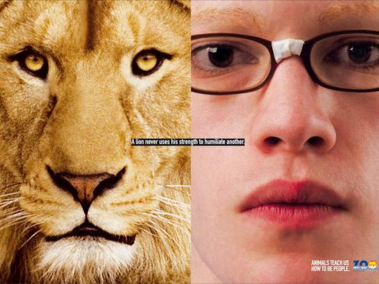 Madrid Zoo Print Ad -  Lion