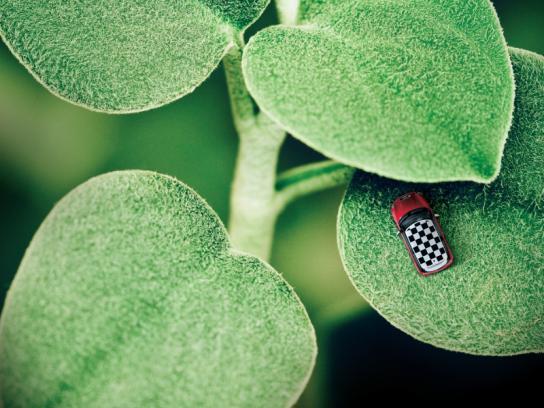 Mini Print Ad -  Ladybug