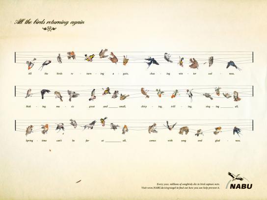 NABU Print Ad -  Songbirds
