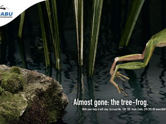 NABU Print Ad -  Tree frog