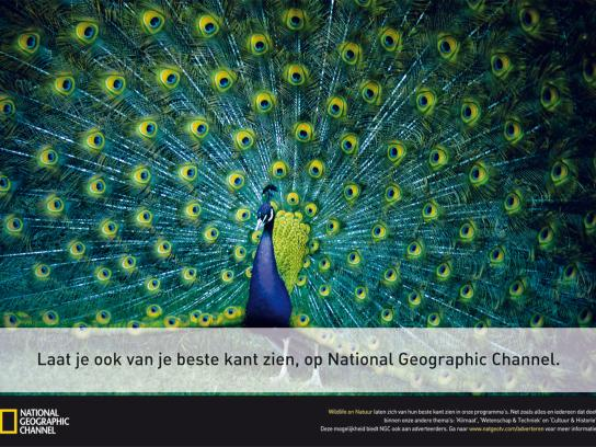 National Geographic Print Ad -  Peacock