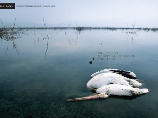 Neenah Print Ad -  Pelican