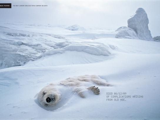 Neenah Print Ad -  Polar bear