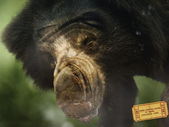 Nehru Zoological Park Print Ad -  Bear