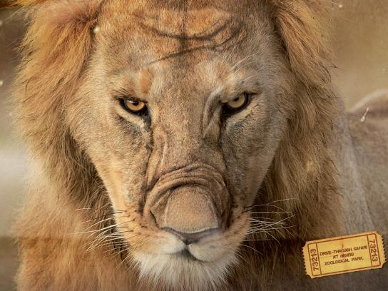 Nehru Zoological Park Print Ad -  Lion