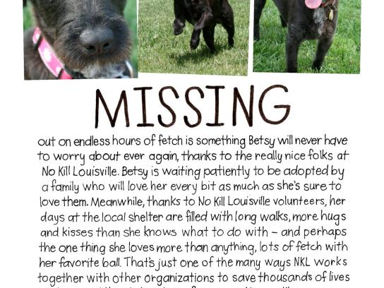 No Kill Louisville Print Ad -  Missing
