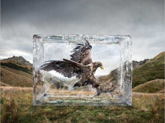 Olympus Outdoor Ad -  Eagle
