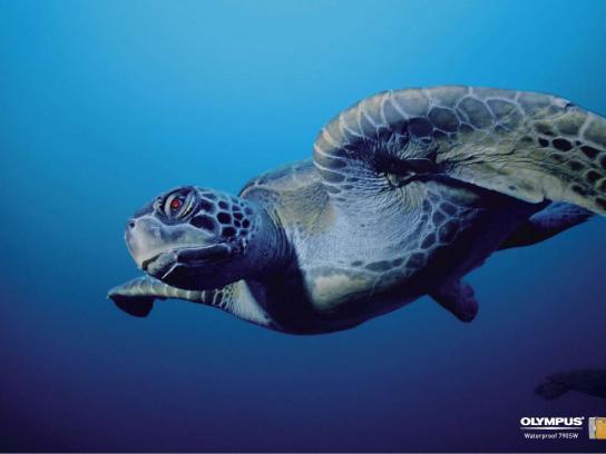 Olympus Print Ad -  Sea turtle