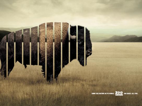 Zoo Safari Print Ad -  Bison