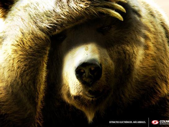 Colpatria Print Ad -  Bear