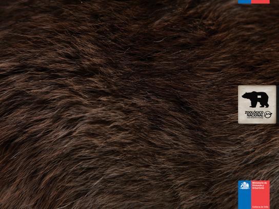Zoologico Nacional Print Ad -  Bear