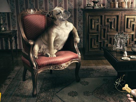Pedigree Print Ad -  Sit