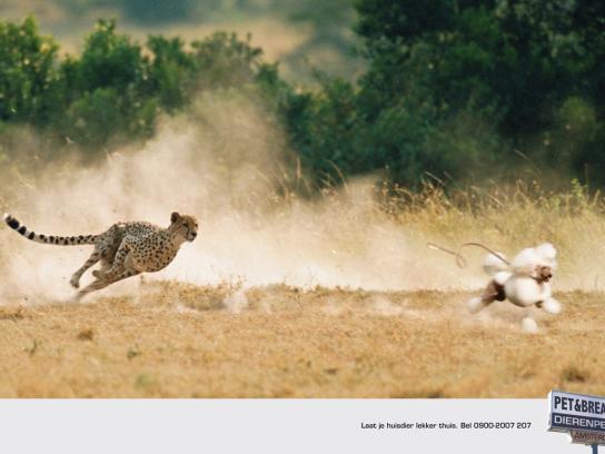 Pet & Breakfast Print Ad -  Cheetah
