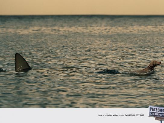 Pet & Breakfast Print Ad -  Shark
