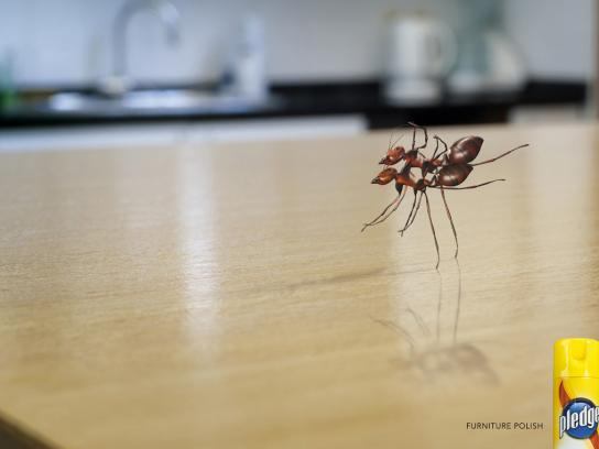 Pledge Print Ad -  Ants