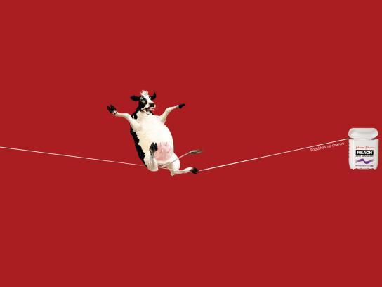 Johnson & Johnson Print Ad -  Cow