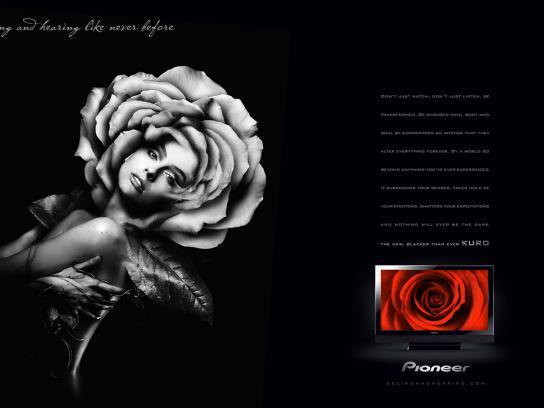 Pioneer Print Ad -  Rose