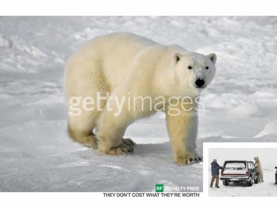 Getty Images Print Ad -  Bear