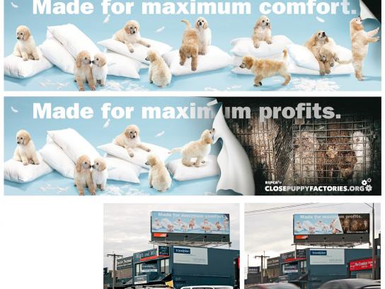 RSPCA Outdoor Ad -  closepuppyfactories.org