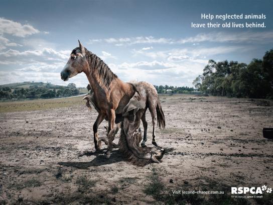RSPCA Print Ad -  Horse
