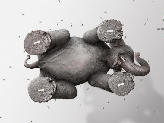 Polar Bear Print Ad -  Elephant