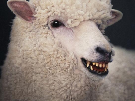 Toku-Chan Korean BBQ House Print Ad -  Sheep